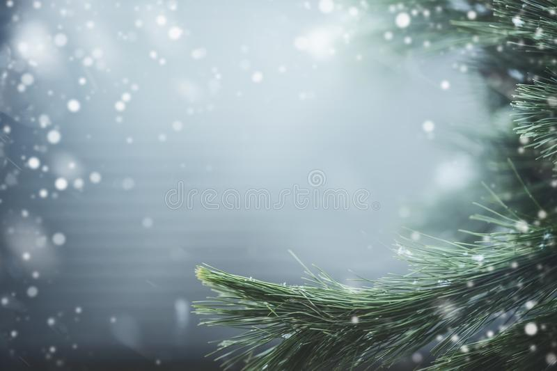 Wonderful winter background with fir branches and snow. Winter holidays and Christmas stock image