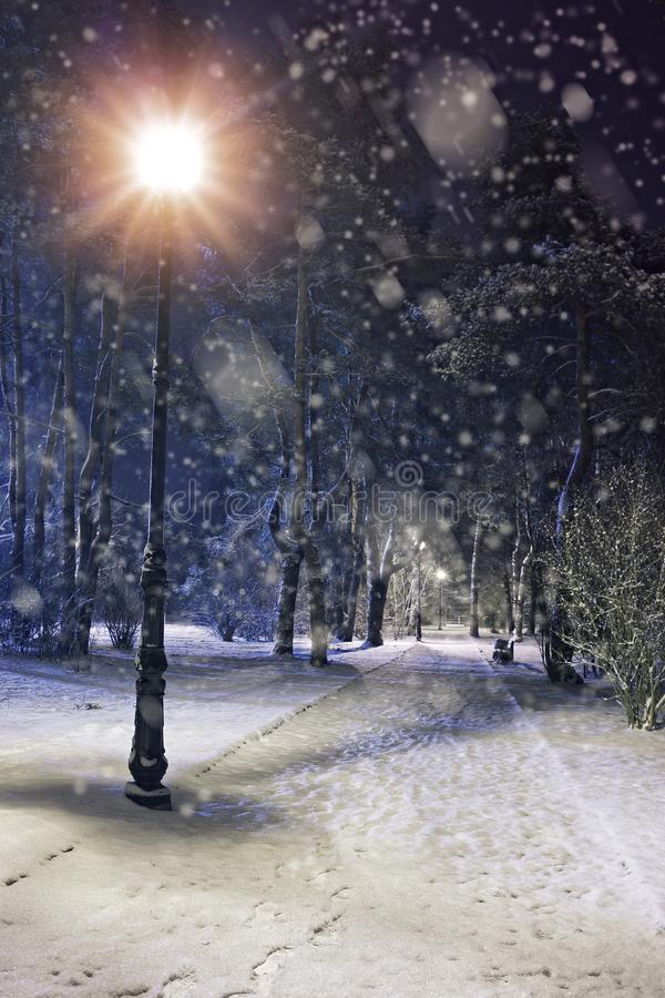 Wonderful winter evening stock photo