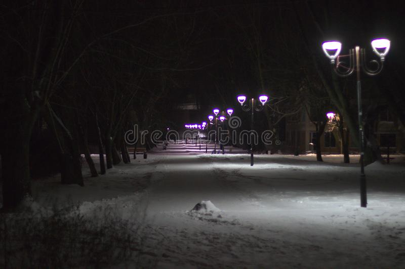 Wonderful winter evening landscape. Illuminated alley in the park.  royalty free stock photography