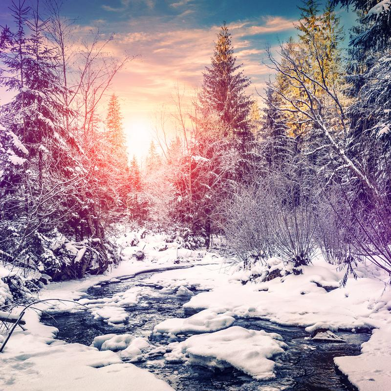 Wonderful winter landscape. snow covered pine tree over the mountain river under sunlight. Colorful sky. wonderful, amazing view. christmas holiday concept stock photo