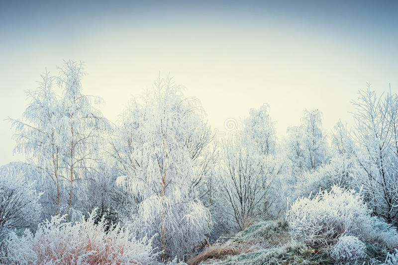 Wonderful winter landscape with snowy trees and grasses at sky background. Outdoor royalty free stock photography
