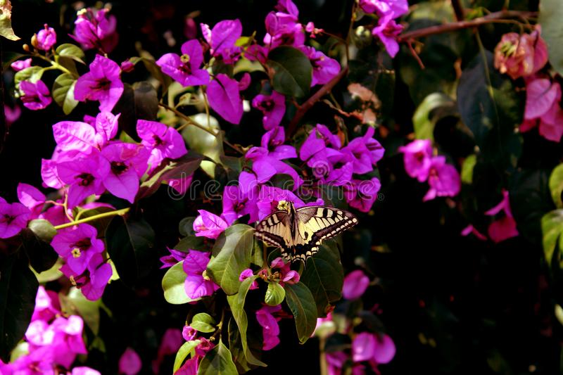 Wonderful Yellow Butterfly Background royalty free stock images
