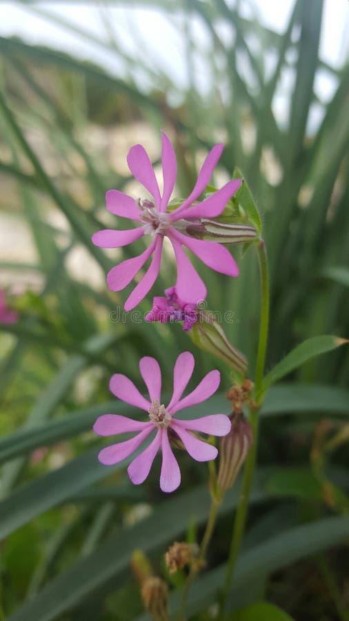 Wonderfull весны цветка красивое стоковые изображения rf