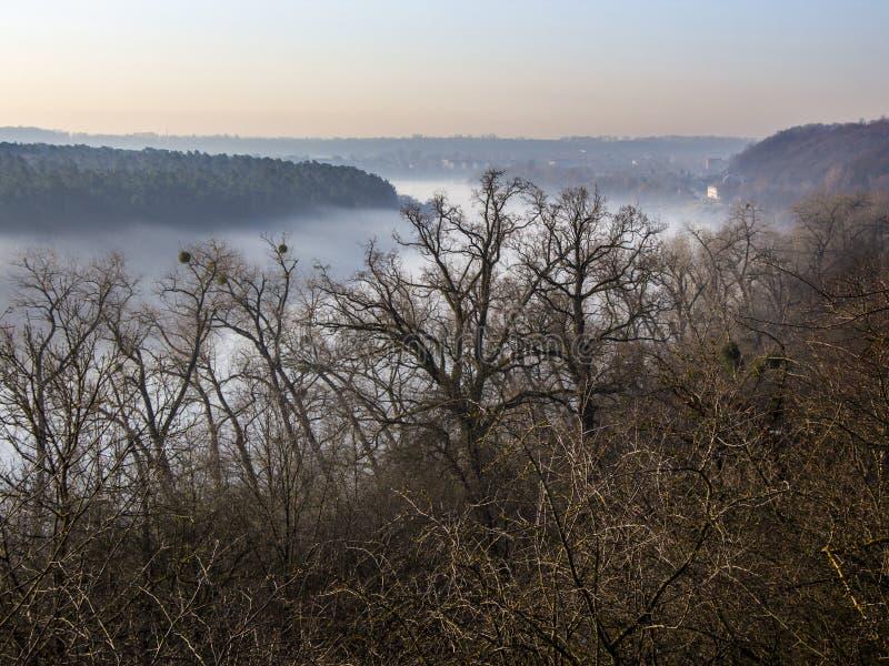 Wonderfull flodlandskap som omges av skogen royaltyfri bild
