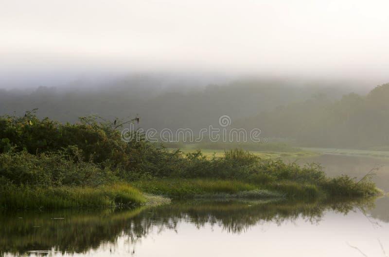 Wonderfullbioma van kaw-Roura Nationaal Natuurreservaat, Franse Guina royalty-vrije stock foto