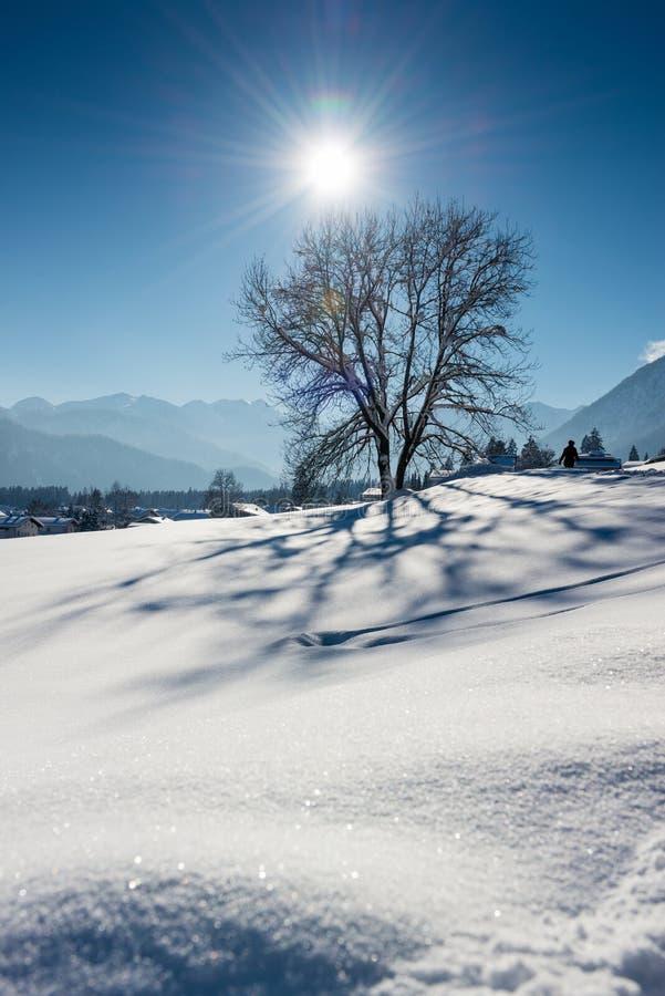 Wonderfullboom in Oostenrijkse alpen met zonstralen royalty-vrije stock afbeeldingen