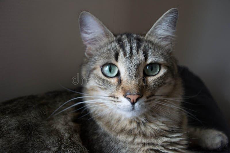 Wondering cat 2 stock photos