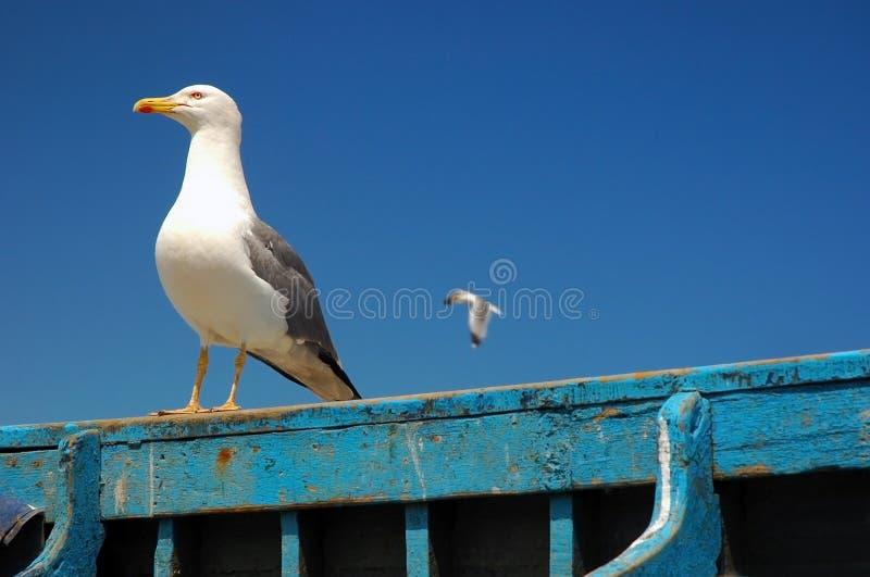 Wondering Seagull Stock Photo