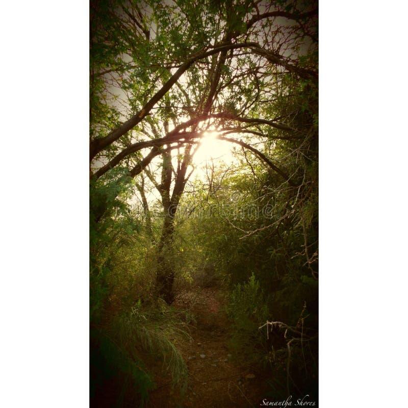 wonderland στοκ φωτογραφία