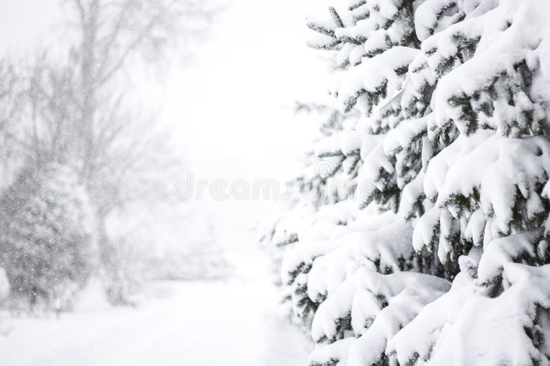 Wonderland Fir trees covered snow Beautiful Winter landscape scene background with snow covered trees Beauty winter backdrop. Frosty trees in snowy forest royalty free stock image