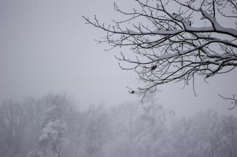 Wonderland Trees covered snow Beautiful Winter landscape scene background with snow covered trees Beauty winter backdrop Frosty. Trees in snowy forest Branches royalty free stock images