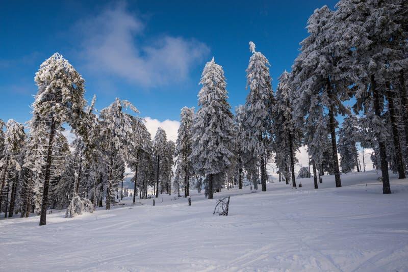 Wonderland. Winter in carpathian mountains, Arieseni, Romania stock photography