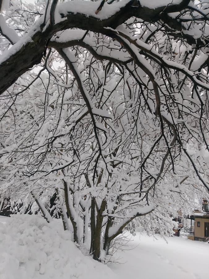 Wonderland Winter royalty free stock photography