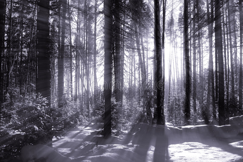 Wonter Wald lizenzfreies stockfoto
