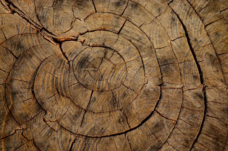 Wood år arkivbild