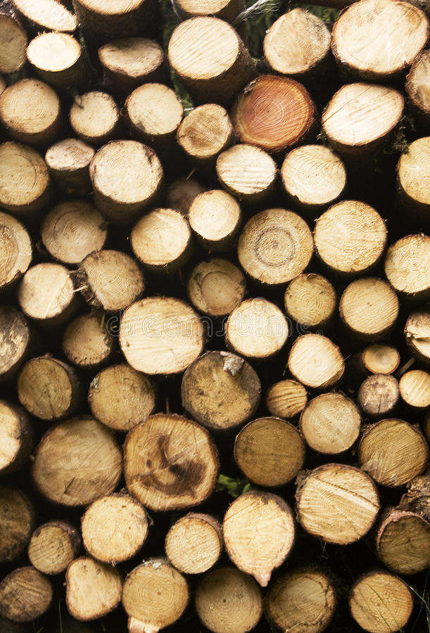 Free Wood Royalty Free Stock Photo - 11821915
