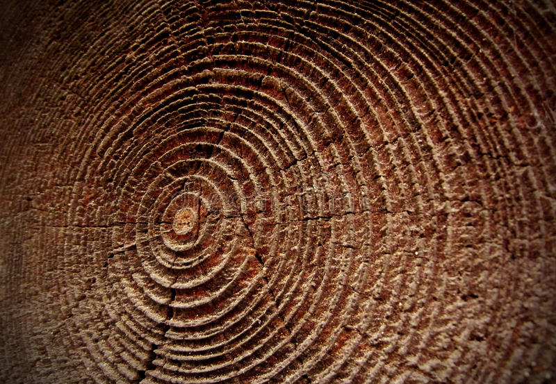Download Wood stock image. Image of beam, forest, wooden, house - 27583943