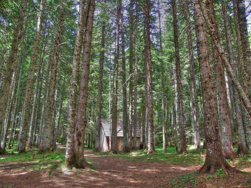 Wood. On the Durmitor mountain in Montenegro stock photo