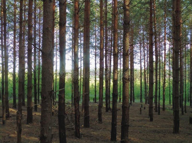 Wood stock image