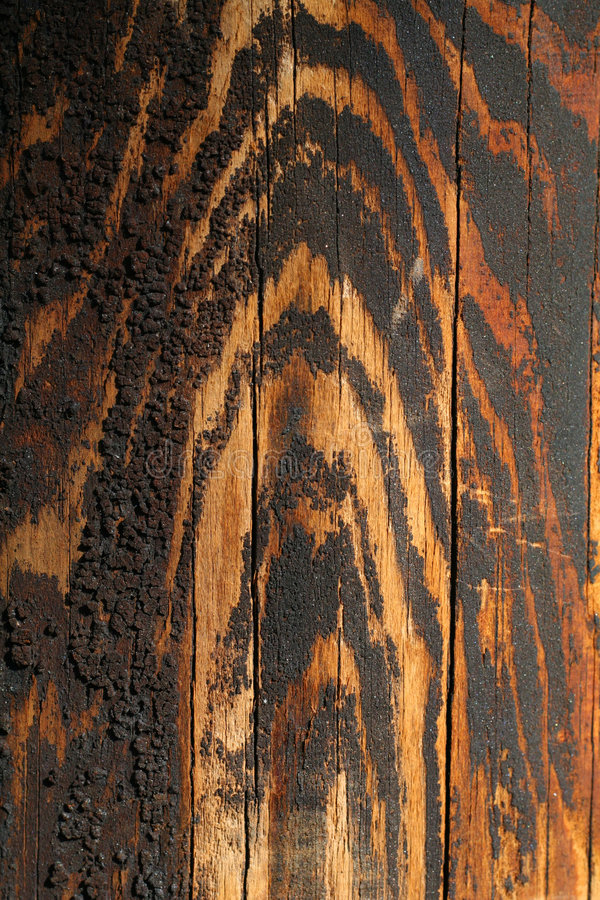 Wood acquired tiger coloring as it aged.  stock photos