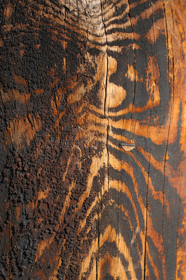 Wood acquired tiger coloring as it aged.  royalty free stock photo
