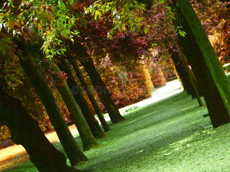 Wood in autumn