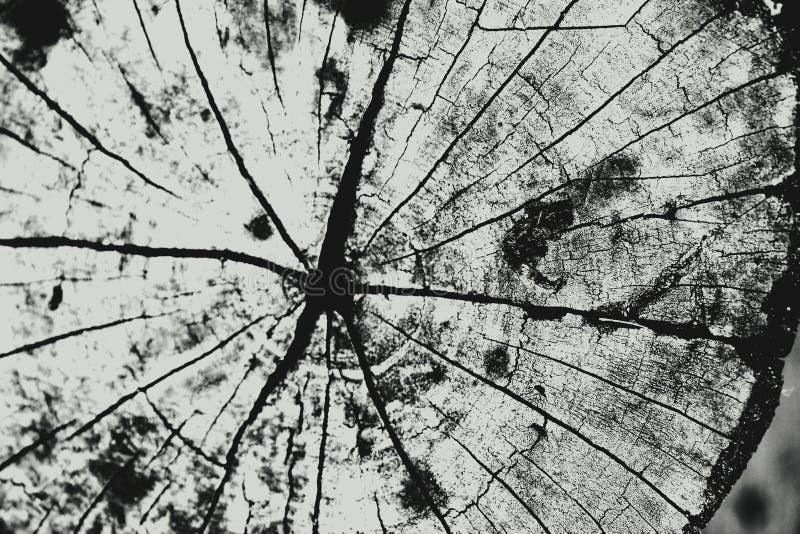 Wood backgr arkivfoto