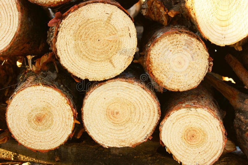 Download Wood background stock photo. Image of environmentalism - 22329682