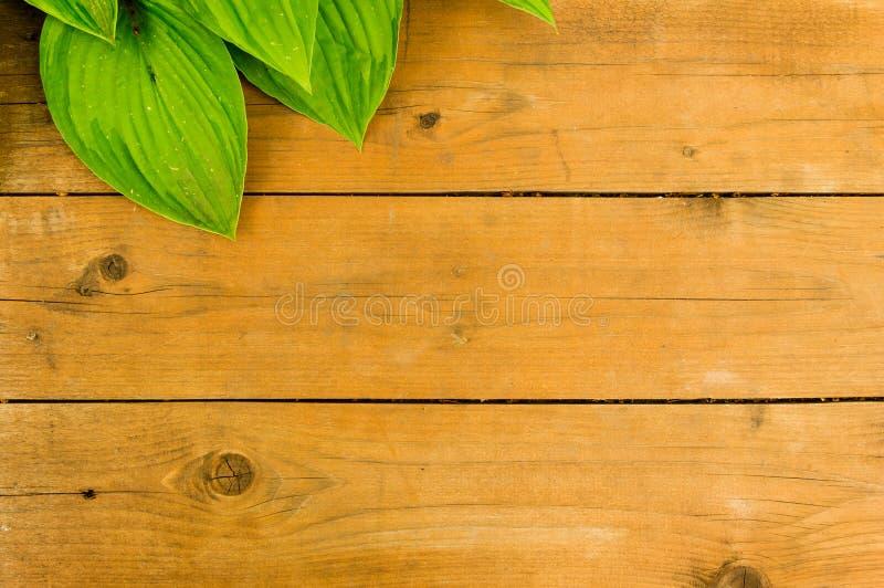 Wood bakgrund med bladet arkivfoto