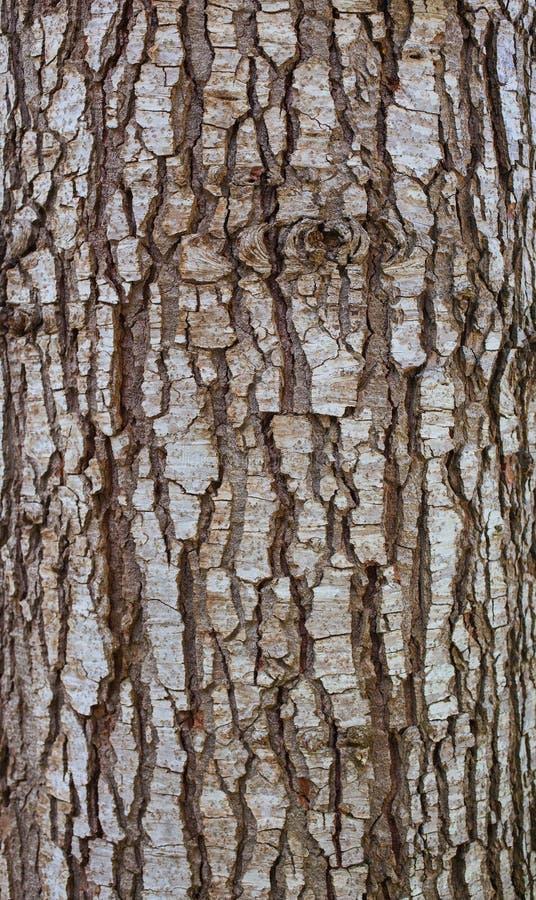 Free Wood Bark Stock Photo - 41285780