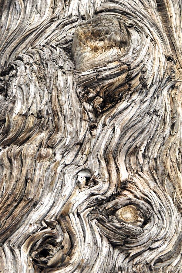 Download Wood bark background stock image. Image of plank, element - 29252169