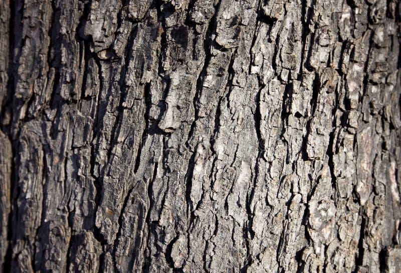 Wood bark backround royalty free stock photo