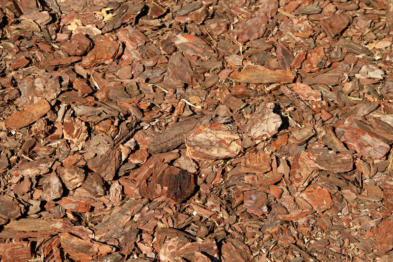 Wood bark chips. Wood bark chipping organic material for gardening stock photo