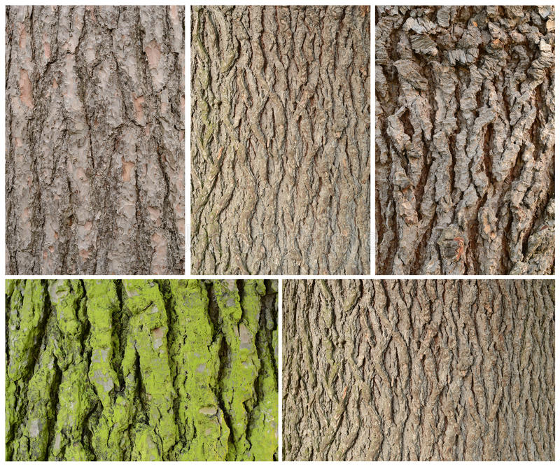Wood bark texture. Five frames of wodd bark pattern texture background stock image