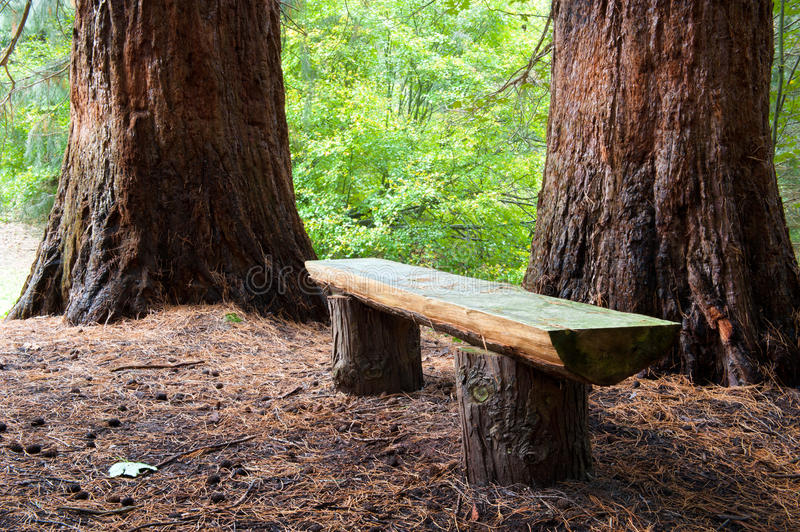 Wood bench royalty free stock photos