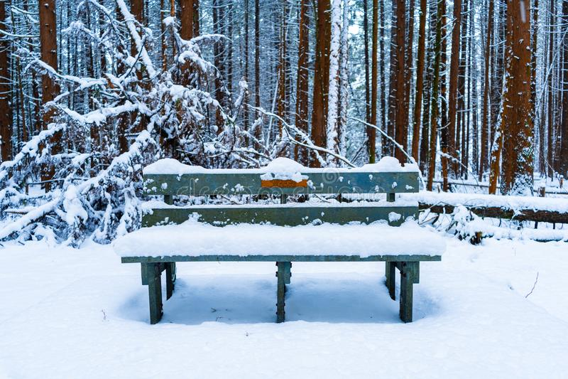 Wooden bench in a forest covered in snowy after a snow storm, with evergreen trees and fluffy snow in the background. Brown tree. Wood bench in a forest covered royalty free stock image