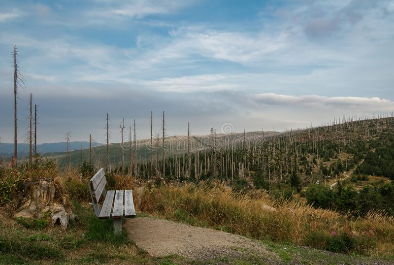 Wood bench on lookout with devasted trees by bark beetle infestation. Sumava National Park and Bavarian Forest, Czech republic and royalty free stock images