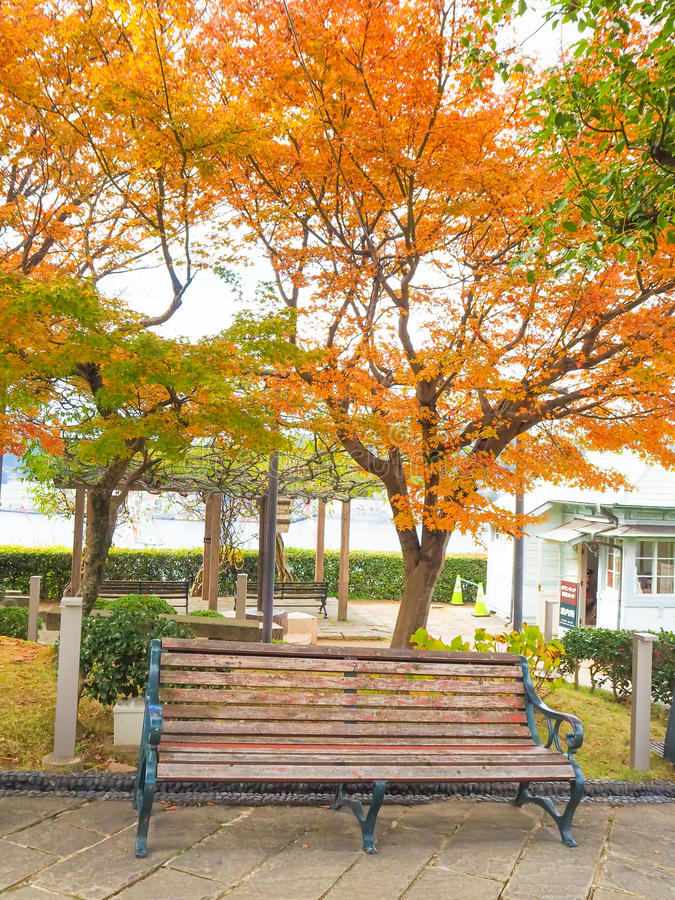 Wood bench in the park in autumn. At Glover garden, Nagasaki, Japan stock images
