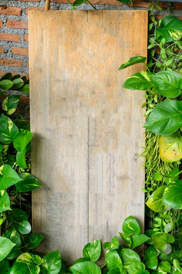 Wood blank signboard with plant leaves cover standing on cafe. Wood blank signboard with plant leaves cover standing on front cafe stock image