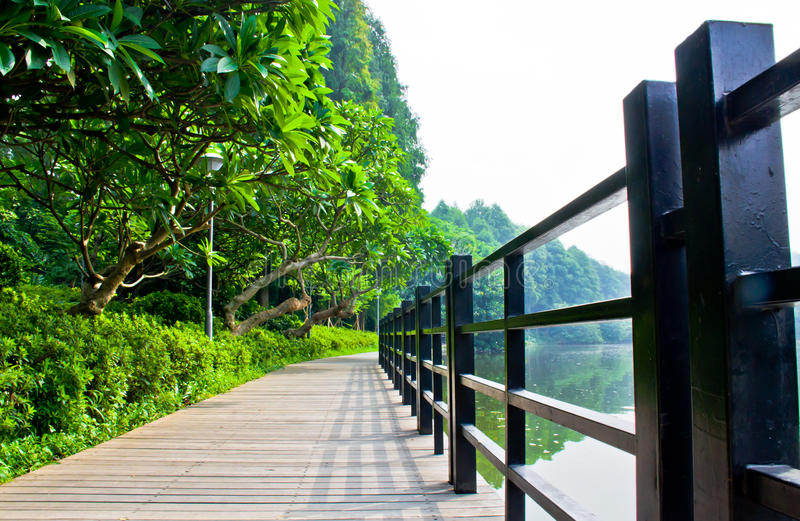 Wood boardwalk in nature reserve. royalty free stock image