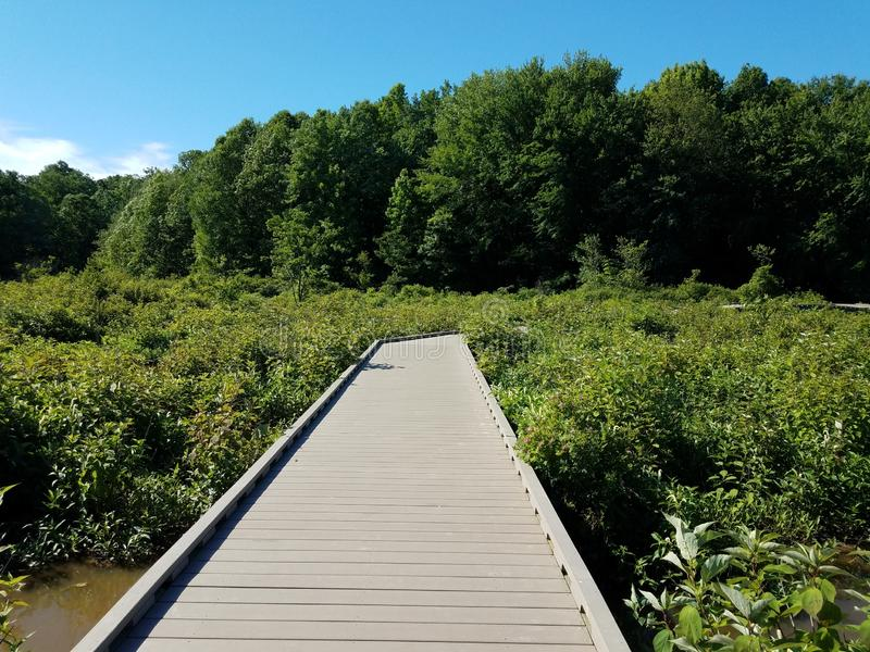 Wood boardwalk or path in wetland or swamp area with green plants. Wood boardwalk or path or trail in wetland or swamp area with green plants stock images