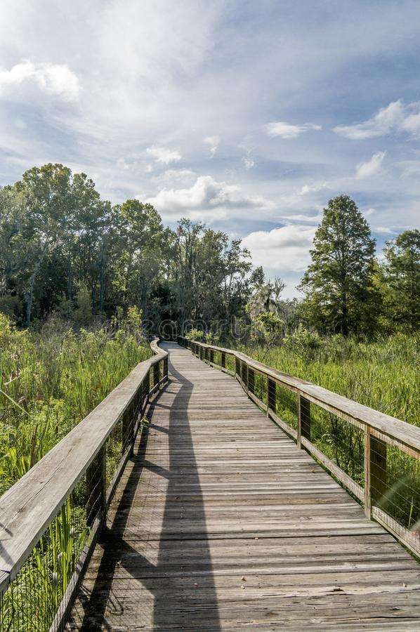 Wood Boardwalk Through Swamp. This is a raised wooden boardwalk that takes you through a swampy area. Its found in Charleston, South Carolina stock images