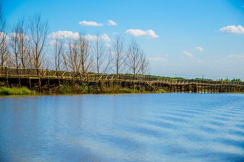 Wood bridge on lake. Wood bridge and lake in binjiang wetland,harbin,china royalty free stock image