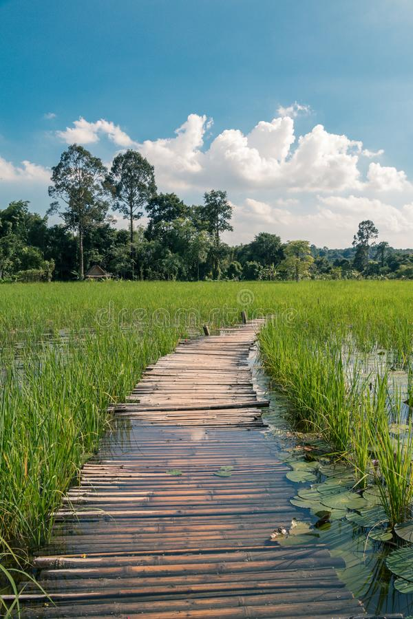 Wood bridge and rice field green background. Bridge ,green field,green trees and blue sky in the day royalty free stock image