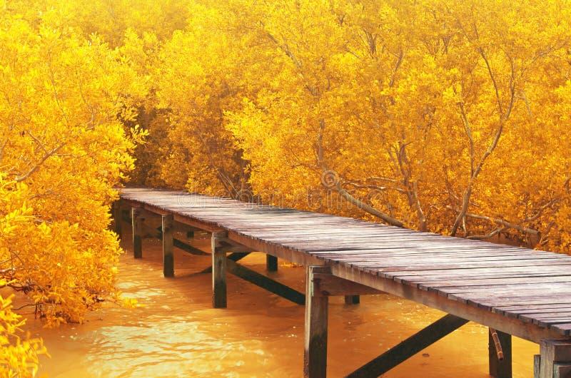 Wood bridge&yellow mangrove forest. stock photography