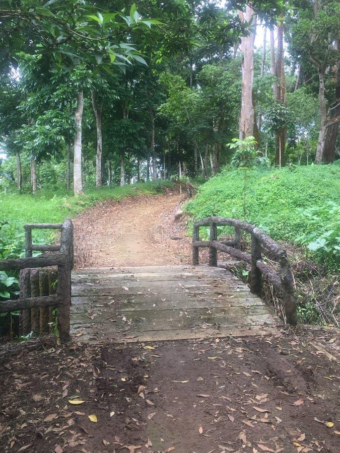 Wood bro i Eden Park royaltyfri foto
