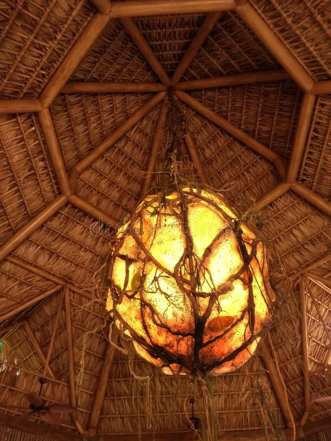 Wood ceiling holding a big cocoon by vines royalty free stock image