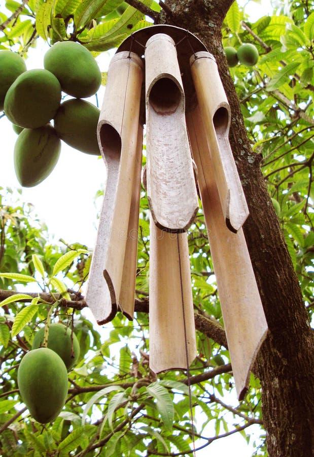 Wood Chimes som hänger på ett mangoträd royaltyfri bild