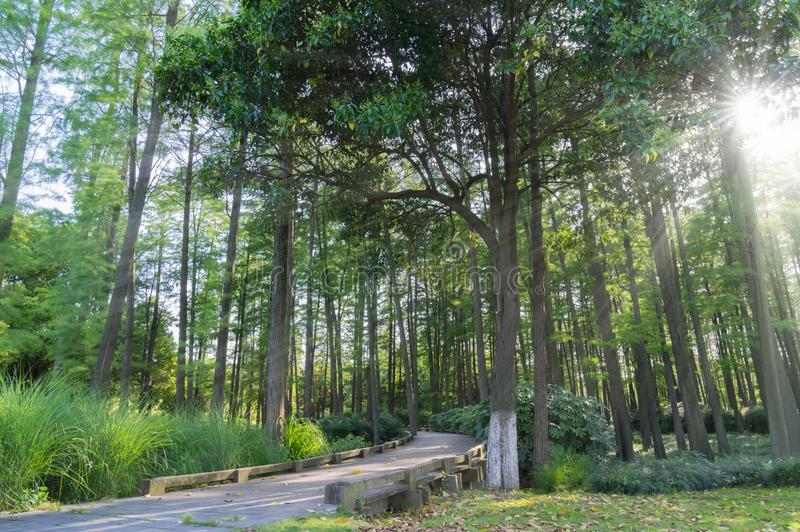 A wood in China. Beautiful view of Wuhan in China.Wuhan is the capital of Hubei province, China, and is the most populous city in Central China. It lies in the stock photography