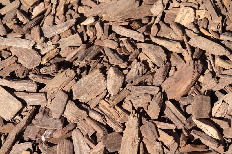 Wood Chip royalty free stock photography